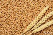 Казахстанское зерно